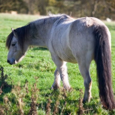 smudge-the-pony
