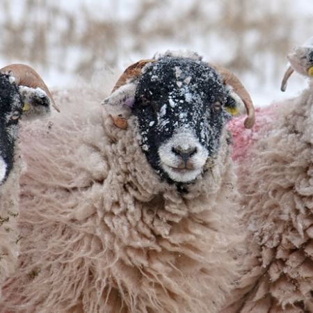 snow-swaledales